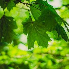 Días verdes en Madrid y Sierra de Guadarrama