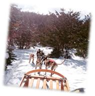 trineos en la nieve